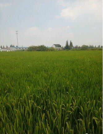 上海市嘉定区外冈镇65亩耕地出租