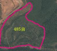 广东省肇庆市485亩林地转让