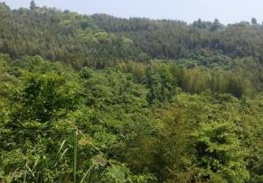 广东省清远市3000亩林地出租