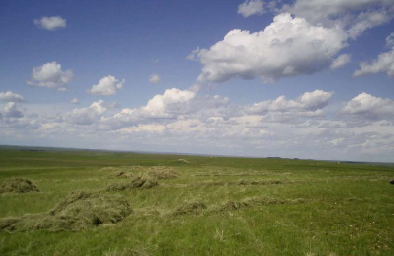 内蒙古兴安盟1600亩人工牧草地出租