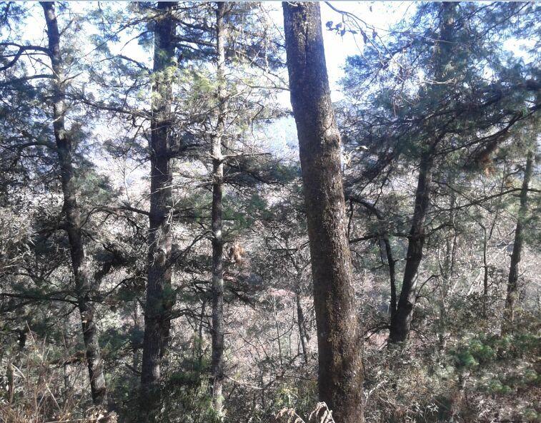 四川省甘孜藏族自治州200000亩林地转让