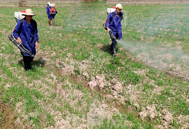 湖北省鄂州303亩旱地出租