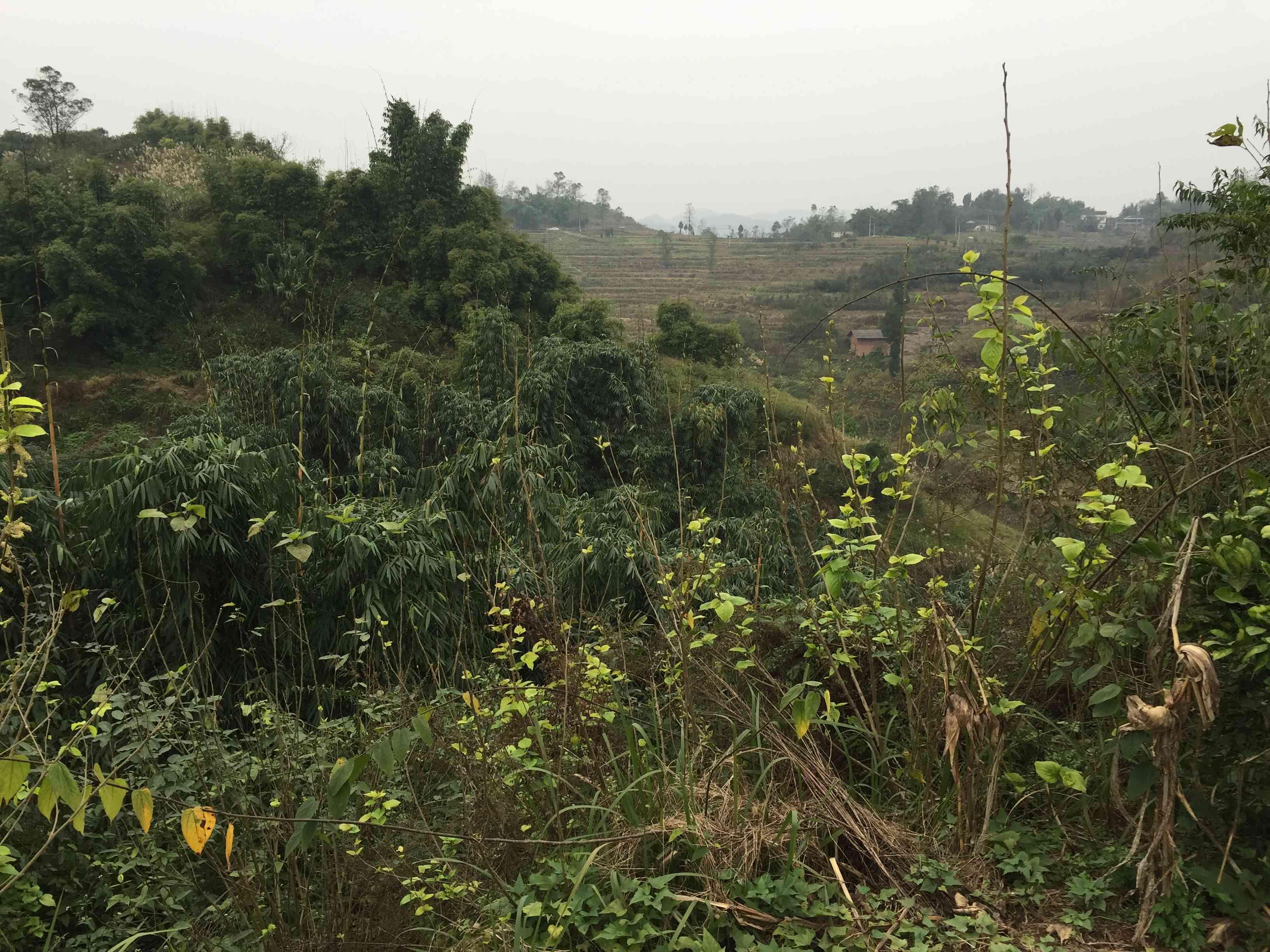 重庆市渝北区古路镇草坪村52亩林地出租