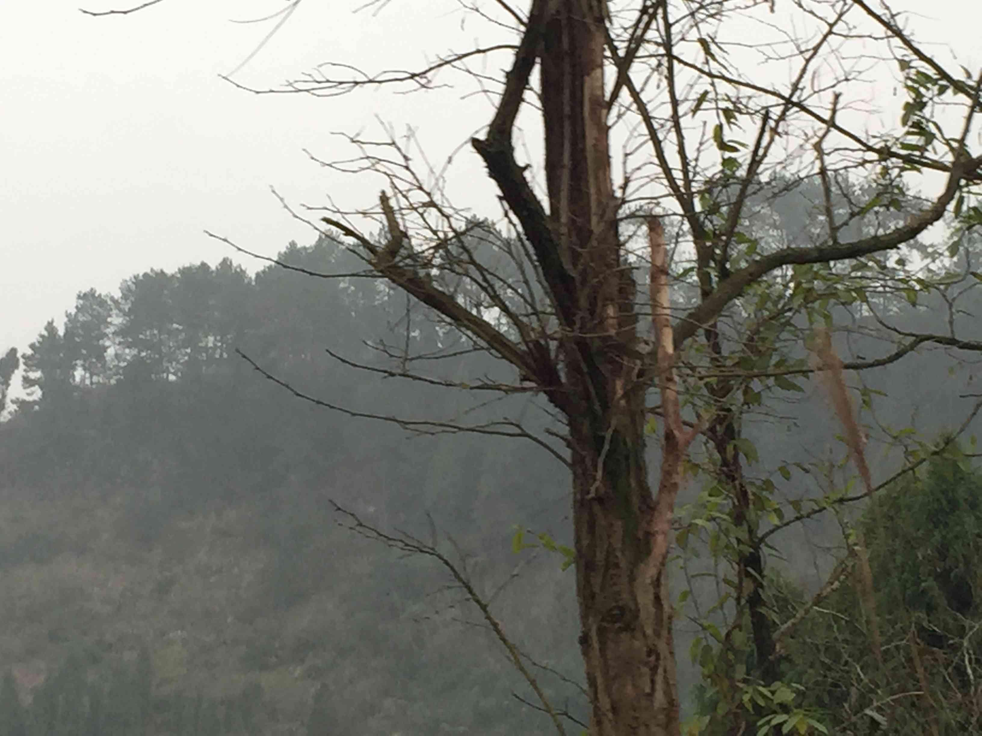 重庆市渝北区500亩林地出租